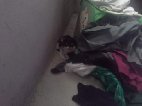 "Ladybug says, ""Excuse me, did someone invite you to my clothes pile hideout?"""