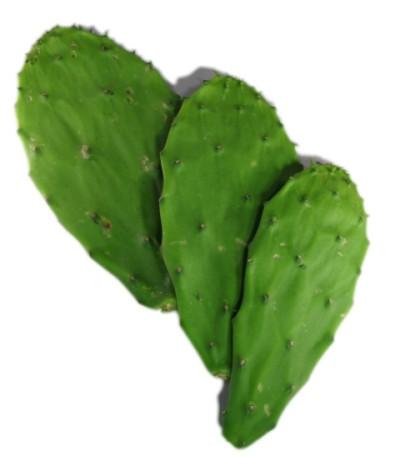 cactusleaves
